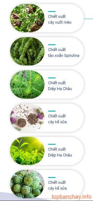 thành phần detox herb
